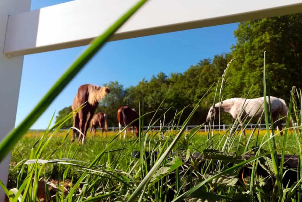 dakima-ranch-koppel01